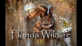 Florida Wildlife in 4k
