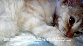 Котенок после операции терпеливо выдерживает все процедуры Главное чтобы его не бросали одного.