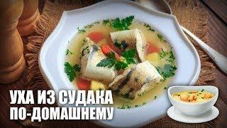 Уха из судака по-домашнему — видео рецепт