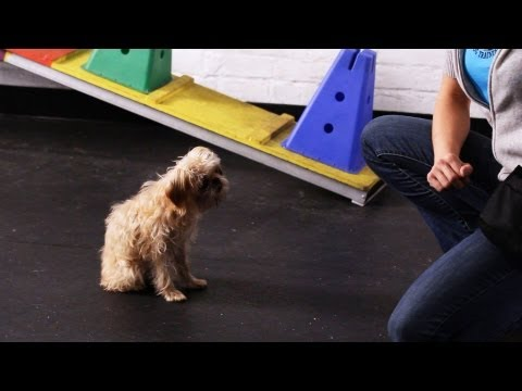 How to Teach Your Dog to Wave Goodbye | Dog Tricks