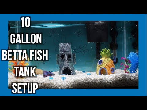 10 Gallon Betta Fish Tank Setup Youtube