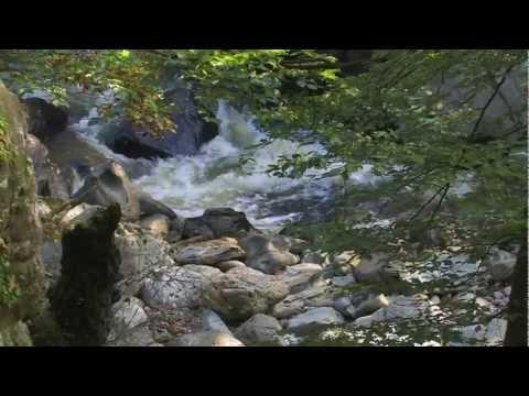 Fairy Glen Water, River Conwy, Betws-y-Coed, North Wales