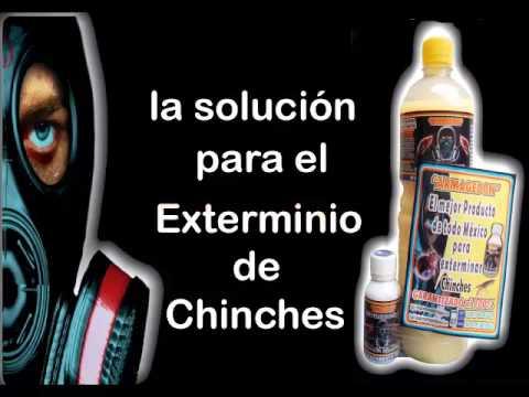 producto efectivo para eliminar chinches
