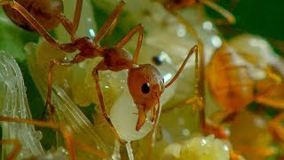 Ants in Agriculture | Earth Unplugged thumbnail