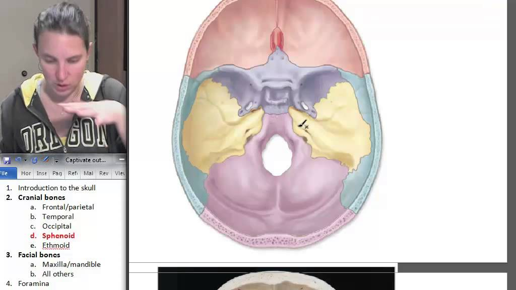 5 sphenoid bone - youtube, Human Body
