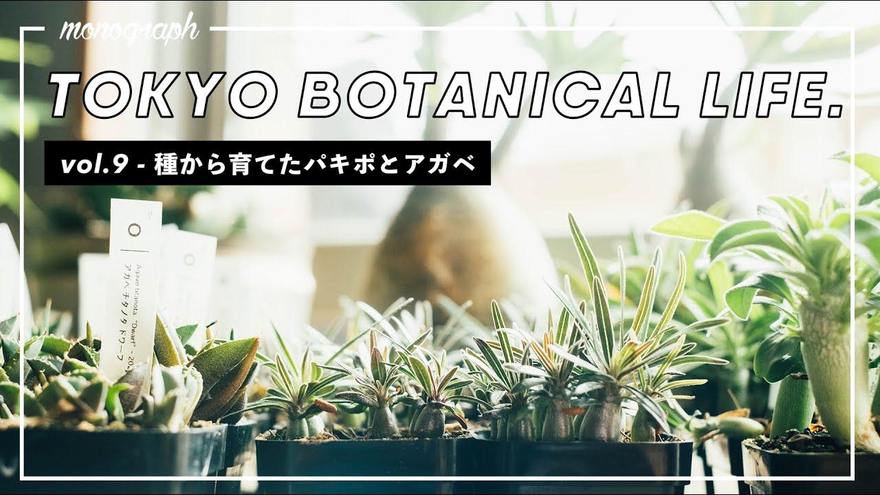 TOKYO BOTANICAL LIFE - vol.9 種から育てたパキポディウム・グラキリスとアガベの実生達