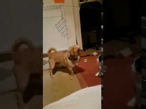 Dog Takes Out Cat #Wrong Place Wrong Time You Won't See It Coming
