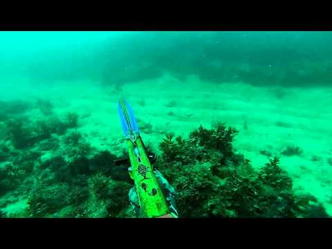 Spearfishing Australia - Central Qld