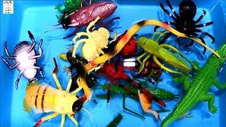 곤충 벌레 파충류 물놀이하며 영어 이름 배우기 Lear…