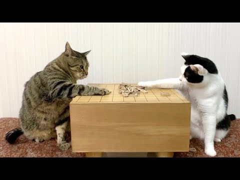 Japanese table game with cats