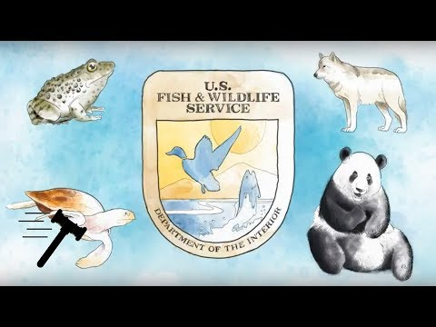 Weyerhaeuser Company v. United States Fish and Wildlife Service [SCOTUSbrief]