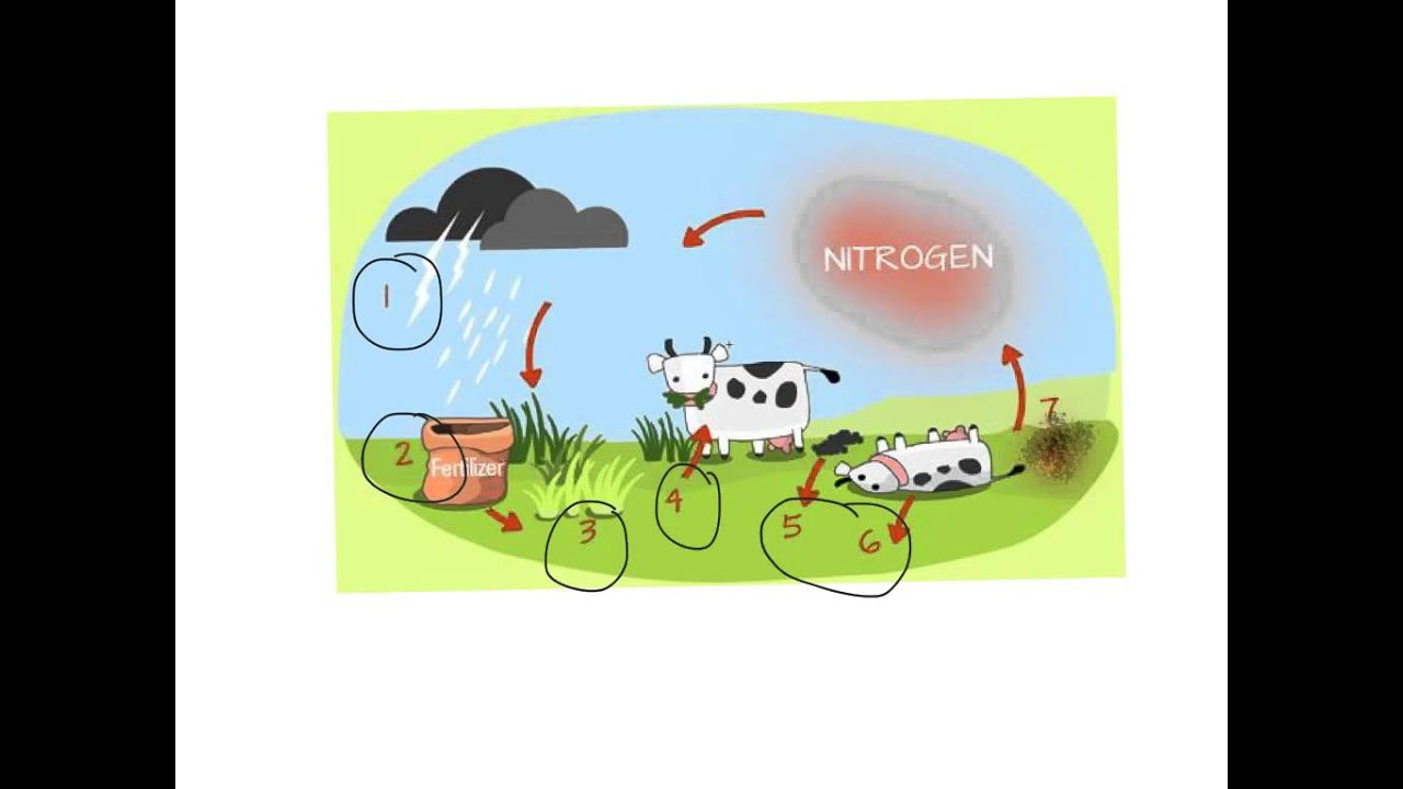 Nitrogen cycle explained youtube pooptronica Images