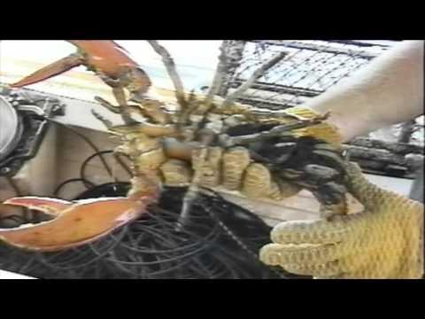 Lobstering on the Benjo : Fishtown Part 1