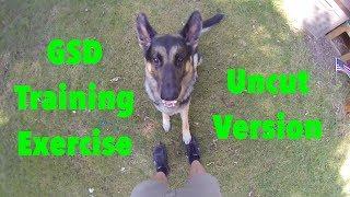 German Shepherd Dog Exercise Uncut