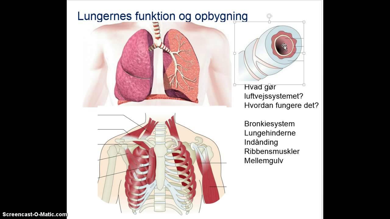 hvad er anatomi og fysiologi