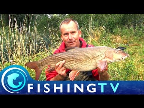 How To Catch Barbel From Small Rivers - Fishing TV