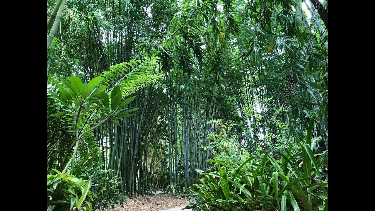 tour tropical bamboo nursery &