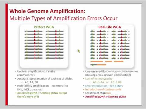 Whole Genome Amplification (WGA): What to Do When You Don't Have Enough Genomic DNA