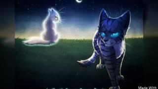 Очень красивые картинки котов водителей под музыку (Жду 5 лайков)
