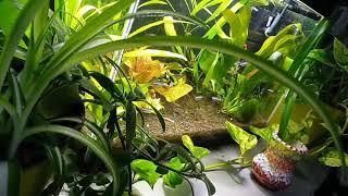 Что случилось в аквариуме на 30 литров за все это время :)