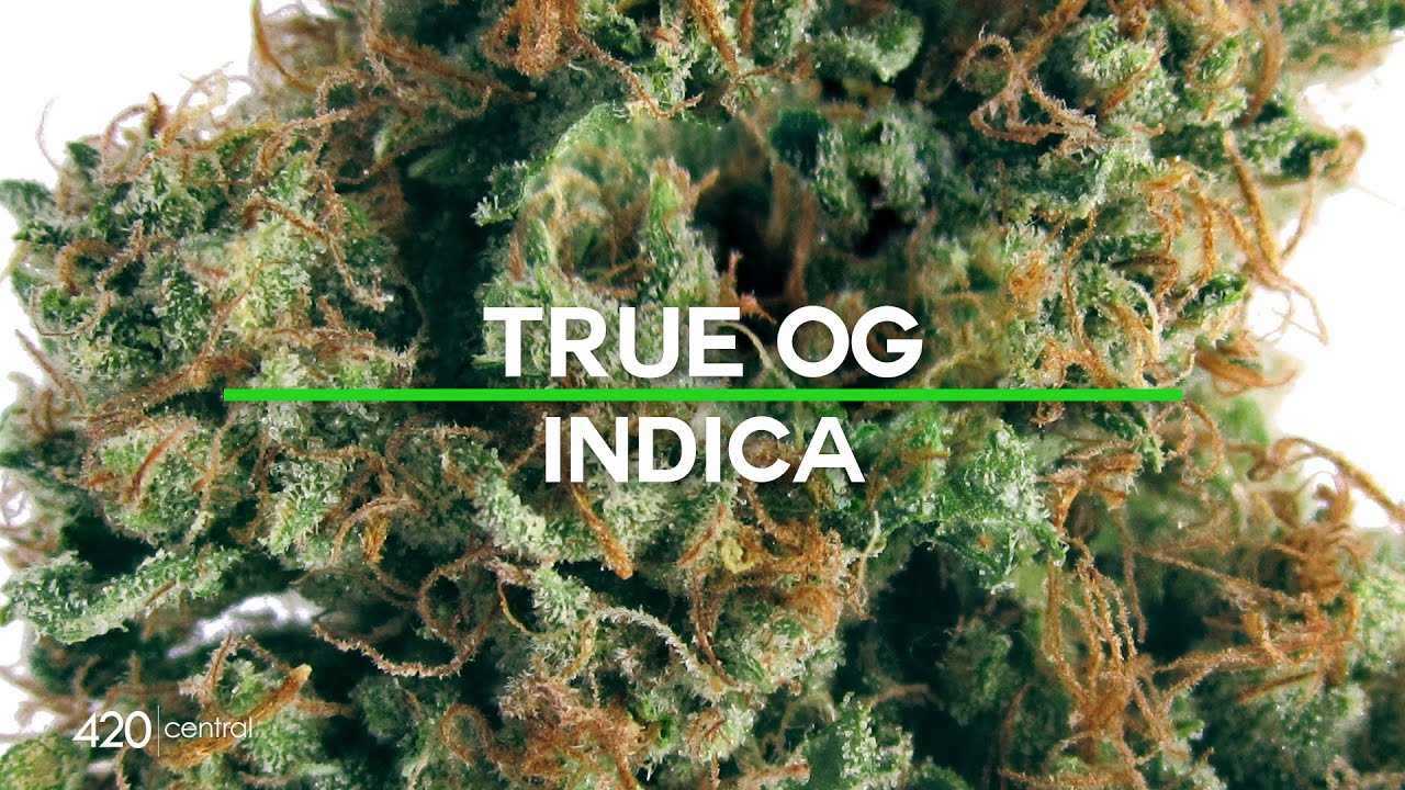 420 Central Strain Reviews - True OG