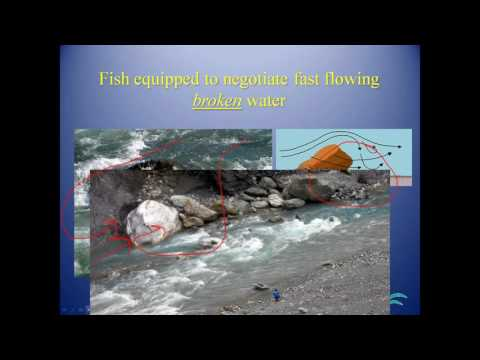Fish passage & stream restoration techniques, Todd Dupuis (ASF)