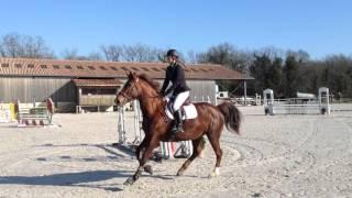 Léonie & Vip - préparatoire 115cm à Brie - 06/03/16