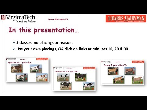 Dairy Judging 101: Practice classes A2 H2 J3