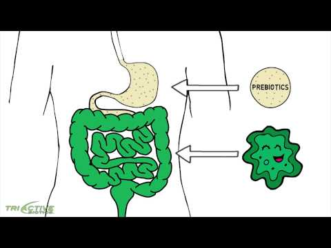 Tri Active Biotics Prebiotic Probiotic Combination