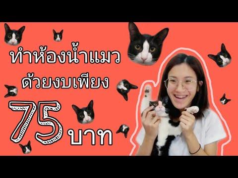 ทำห้องน้ำแมวด้วยงบ 75 บาท l Clada and babies