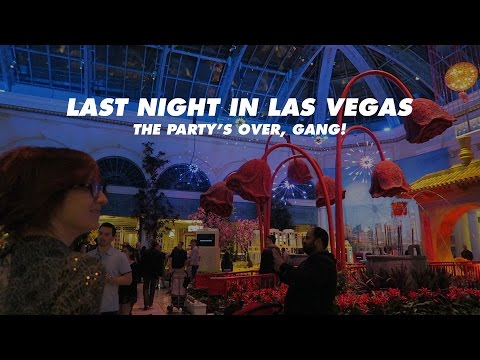 Last Night in Las Vegas | Allie Knight