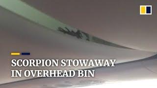 Scorpion stowaway filmed in overhead bin on Indonesian passenger jet