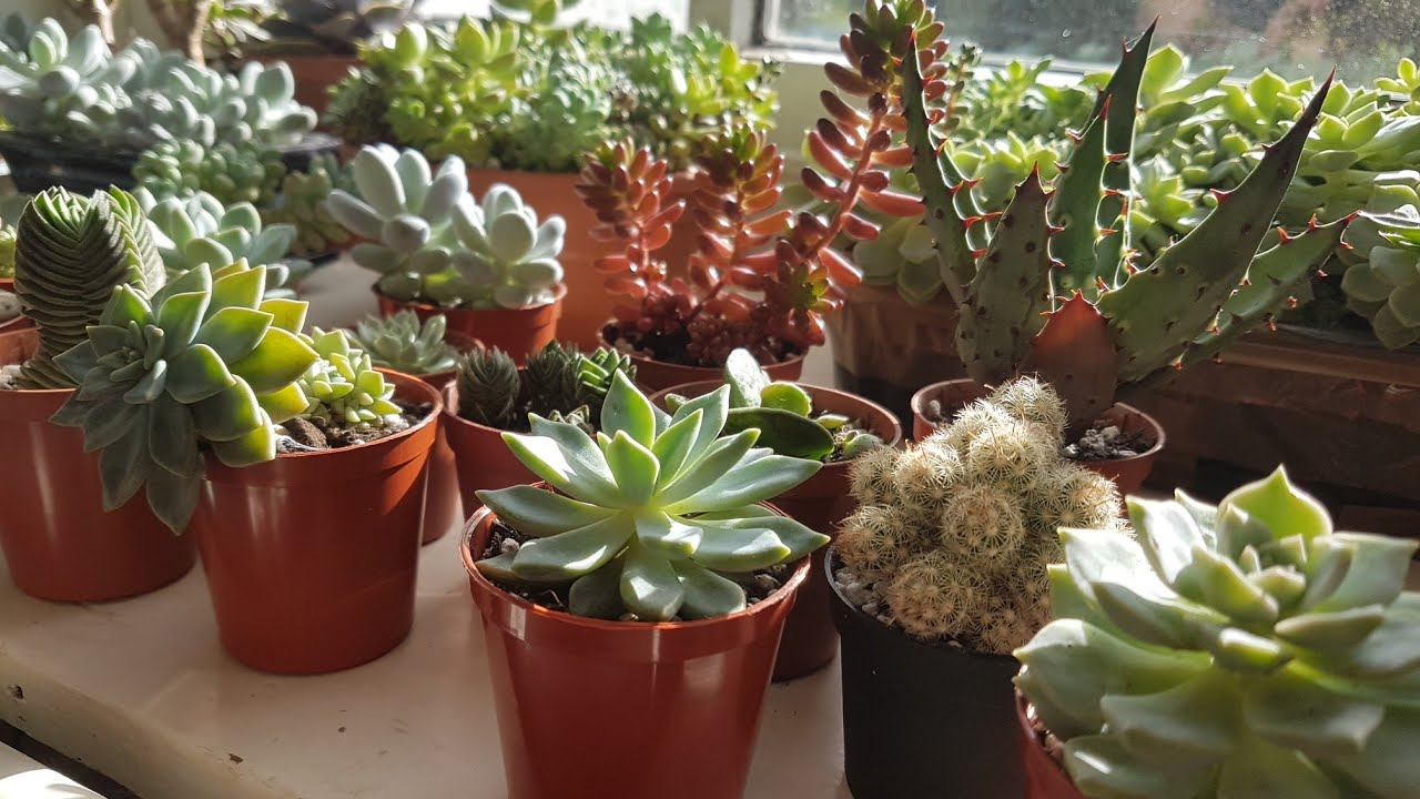 Indoor Succulents Tour - November 2017 - YouTube