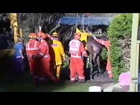 Melbourne Australia: Horse pulled from septic tank