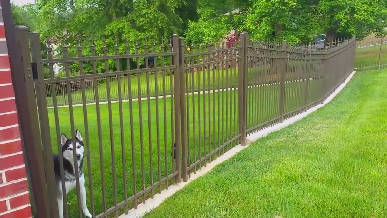 No Dig Dog Fence The Fence For Dogs That Dig Outdoor