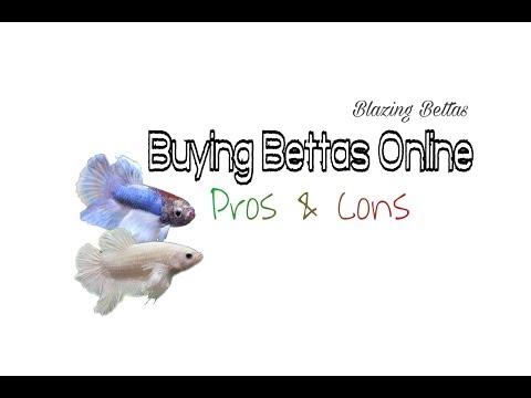 Buying Bettas Online | Pros & Cons