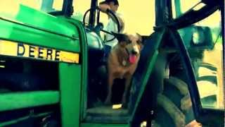 Cute Doggy Rides Shotgun on Tractor | Getting Ready for Community-Supported Agriculture in Maryland