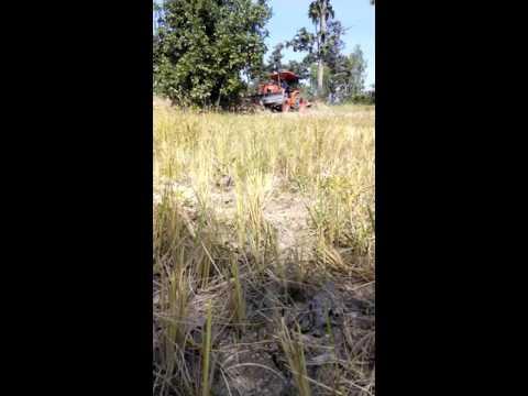 คูโบต้า L5018 ล้มต้นไม้ (ร่องน้ำขุ่น 3)