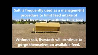 Auto Easy Feeder, The Best Cattle Feeders!  Programmable And Automatic Livestock Feeders