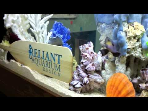 Custom Aquarium Installation: The Real World: San Diego (season 26)