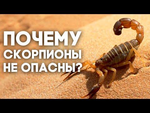 Скорпион в домашних условиях