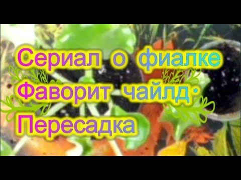 Сериал о фиалке Фаворит чайлд  Пересадка