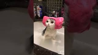 Cat Series: Taking bath with my kitten and it is adorable