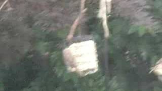 Bird Feeder And Suet