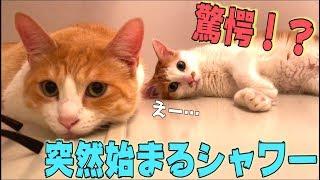 猫たちの目の前で突然シャワーを浴び始めたらまさかの反応がwww