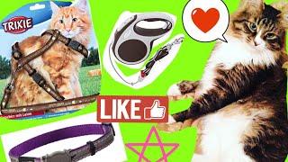 видео Амуниция для кошек