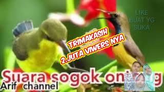 Download Mp3 Suara Sogok Ontong Jantan Dan Betina. Suara Pikat