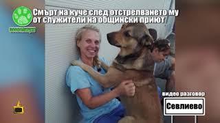 Смърт на куче, след отстрелването му от служители на общински приют