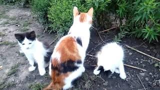 Заботьтесь о полноценном питании кошек