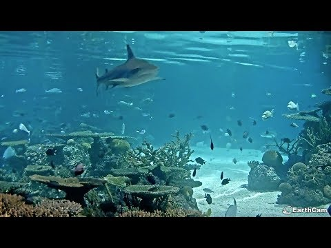 EarthCam Live: Shark And Friends Cams